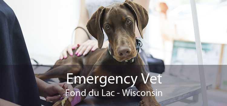 Emergency Vet Fond du Lac - Wisconsin