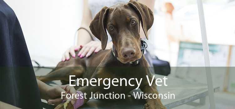 Emergency Vet Forest Junction - Wisconsin