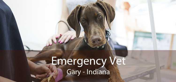 Emergency Vet Gary - Indiana