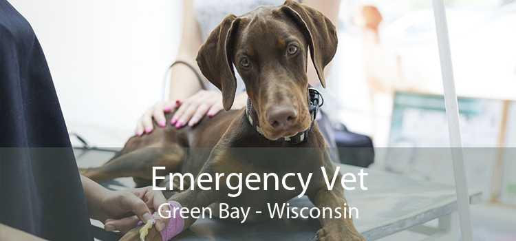 Emergency Vet Green Bay - Wisconsin