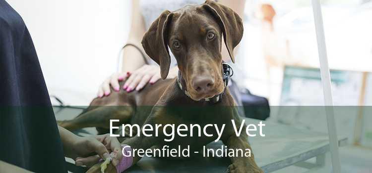 Emergency Vet Greenfield - Indiana