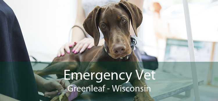 Emergency Vet Greenleaf - Wisconsin