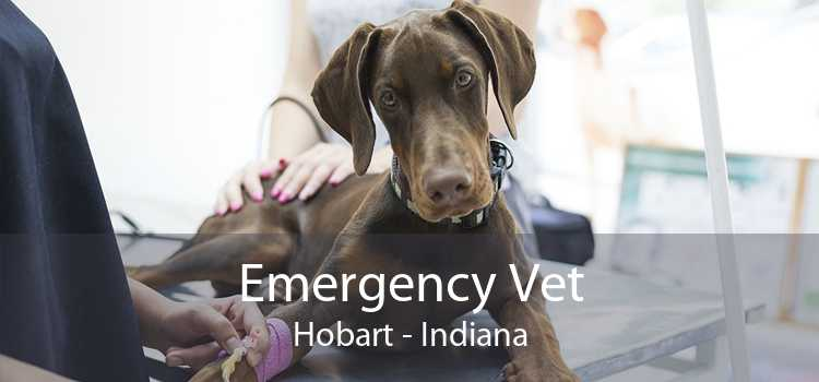 Emergency Vet Hobart - Indiana