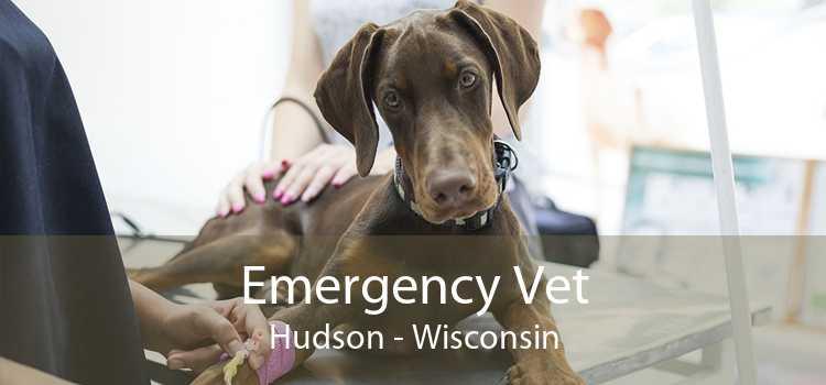 Emergency Vet Hudson - Wisconsin