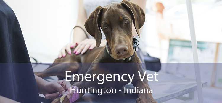 Emergency Vet Huntington - Indiana