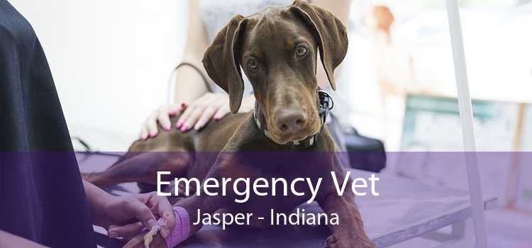 Emergency Vet Jasper - Indiana