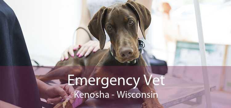 Emergency Vet Kenosha - Wisconsin