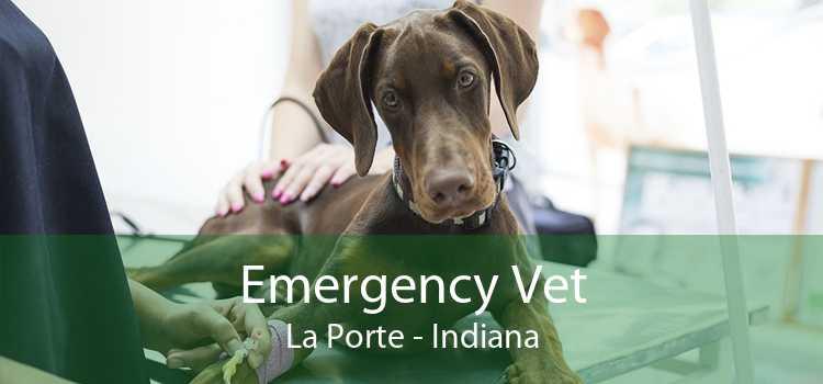 Emergency Vet La Porte - Indiana