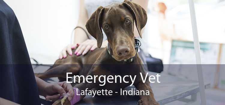 Emergency Vet Lafayette - Indiana