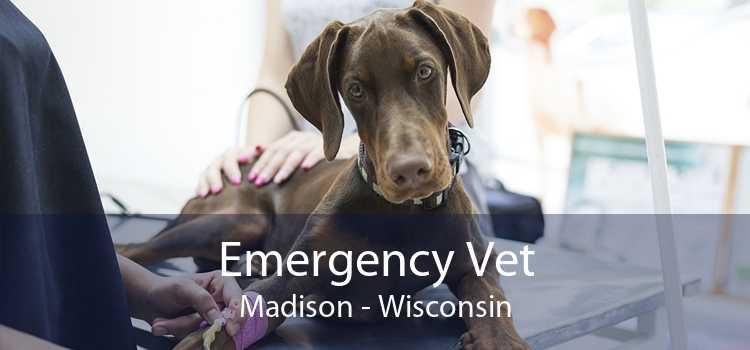 Emergency Vet Madison - Wisconsin