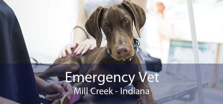 Emergency Vet Mill Creek - Indiana