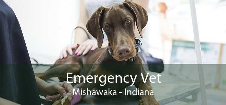 Emergency Vet Mishawaka - Indiana