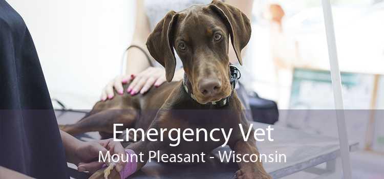 Emergency Vet Mount Pleasant - Wisconsin