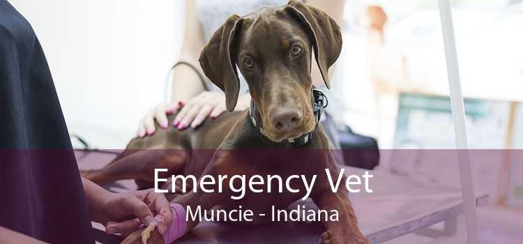 Emergency Vet Muncie - Indiana