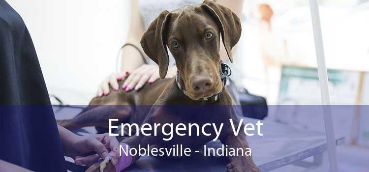 Emergency Vet Noblesville - Indiana