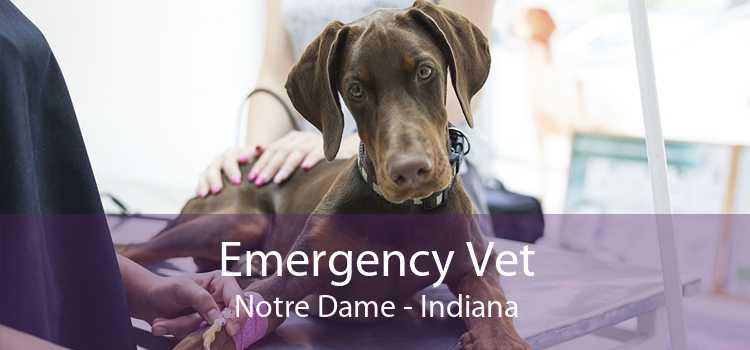 Emergency Vet Notre Dame - Indiana