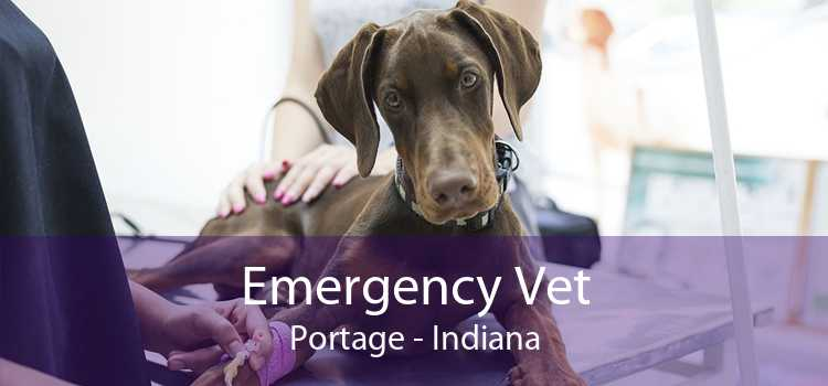 Emergency Vet Portage - Indiana