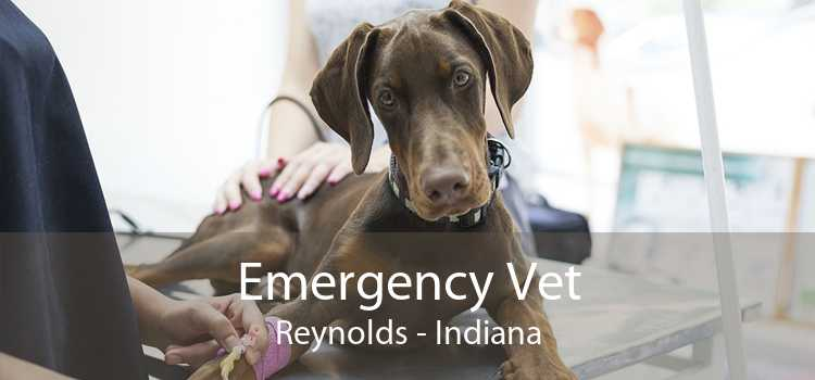 Emergency Vet Reynolds - Indiana