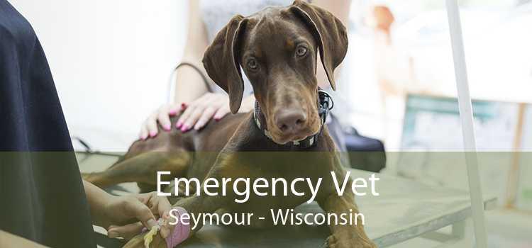 Emergency Vet Seymour - Wisconsin