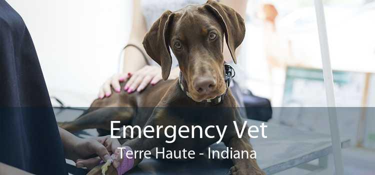 Emergency Vet Terre Haute - Indiana