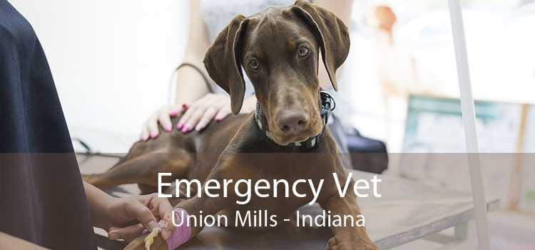 Emergency Vet Union Mills - Indiana