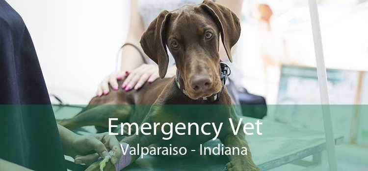 Emergency Vet Valparaiso - Indiana