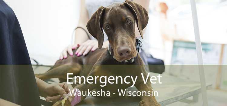 Emergency Vet Waukesha - Wisconsin