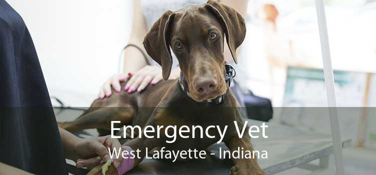 Emergency Vet West Lafayette - Indiana