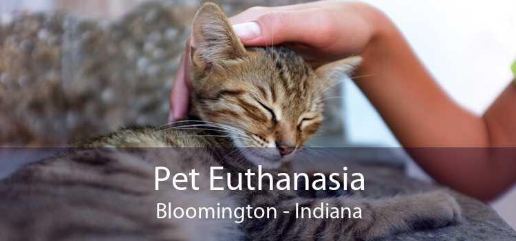 Pet Euthanasia Bloomington - Indiana