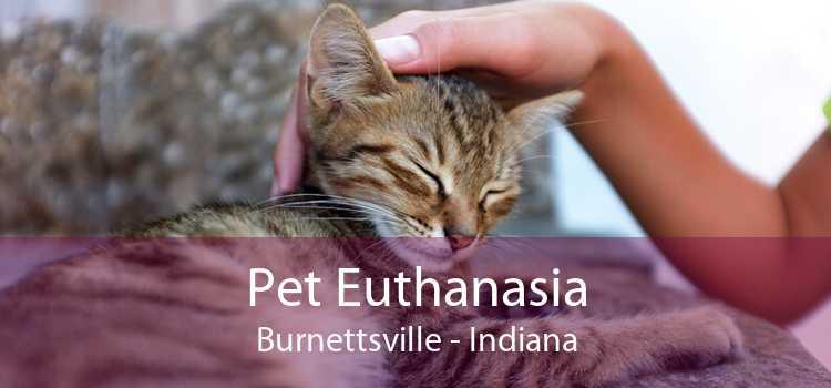 Pet Euthanasia Burnettsville - Indiana