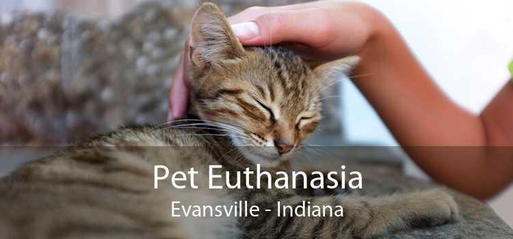 Pet Euthanasia Evansville - Indiana