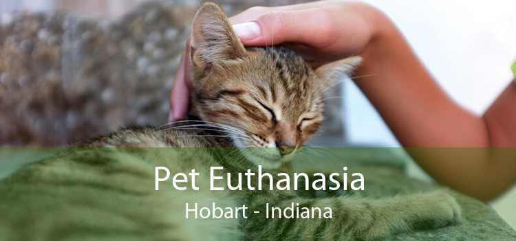 Pet Euthanasia Hobart - Indiana