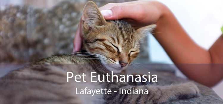 Pet Euthanasia Lafayette - Indiana