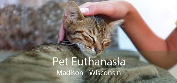 Pet Euthanasia Madison - Wisconsin