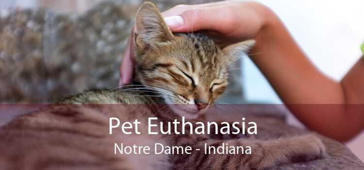 Pet Euthanasia Notre Dame - Indiana