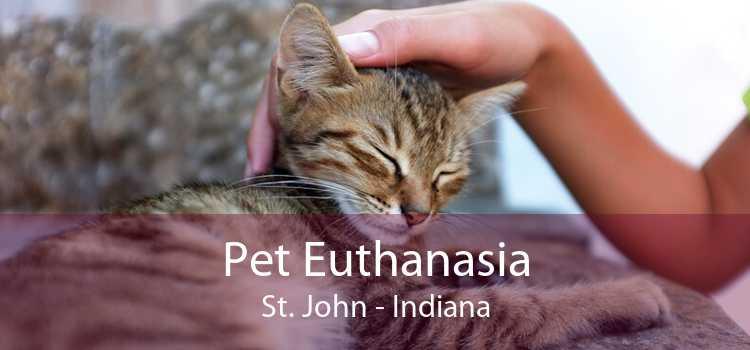 Pet Euthanasia St. John - Indiana
