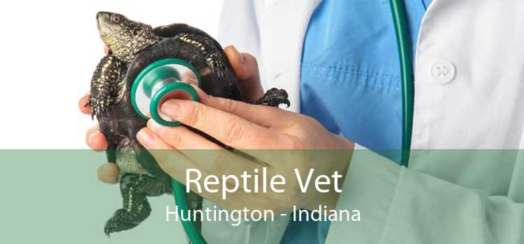 Reptile Vet Huntington - Indiana