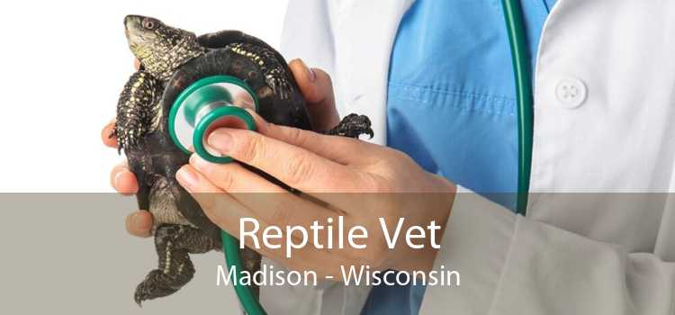 Reptile Vet Madison - Wisconsin