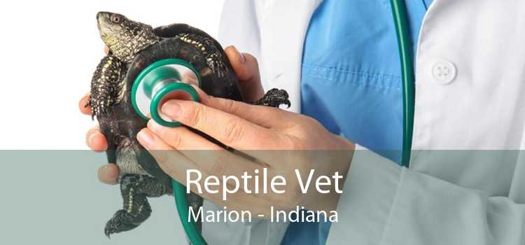 Reptile Vet Marion - Indiana