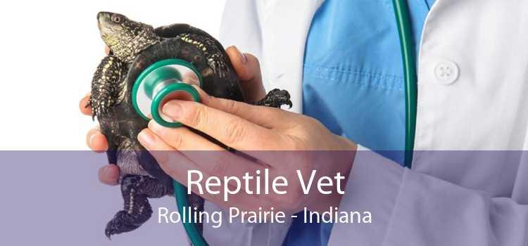 Reptile Vet Rolling Prairie - Indiana