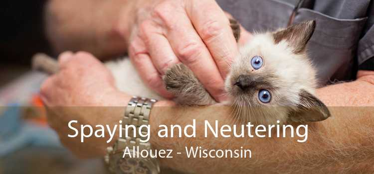 Spaying and Neutering Allouez - Wisconsin