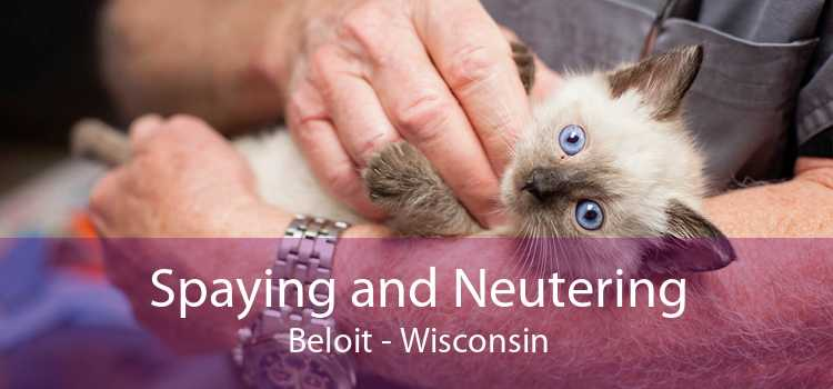 Spaying and Neutering Beloit - Wisconsin