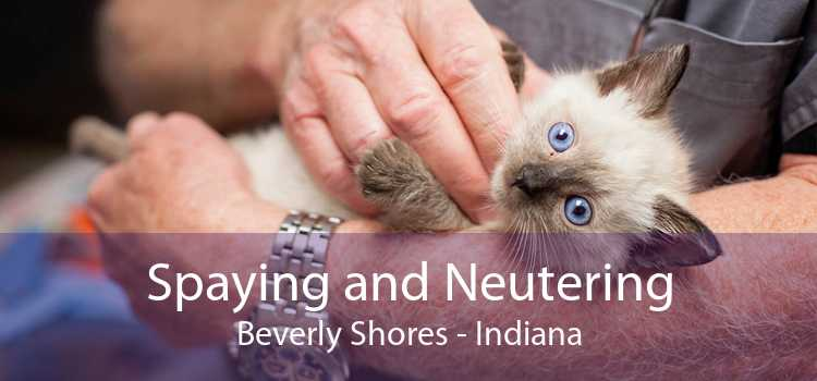 Spaying and Neutering Beverly Shores - Indiana