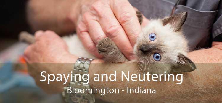Spaying and Neutering Bloomington - Indiana