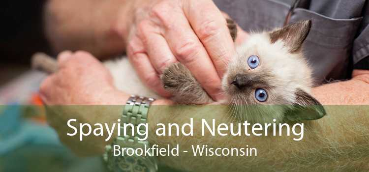 Spaying and Neutering Brookfield - Wisconsin