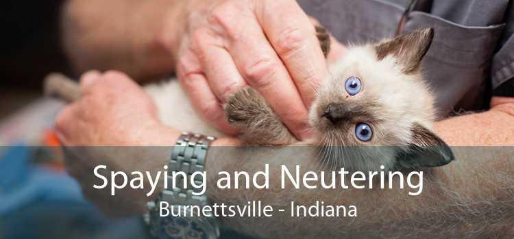 Spaying and Neutering Burnettsville - Indiana