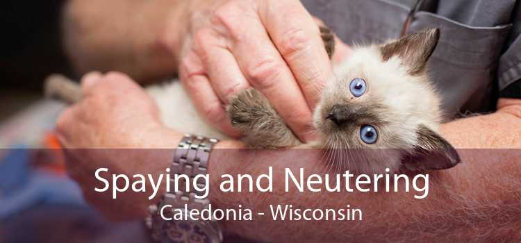 Spaying and Neutering Caledonia - Wisconsin