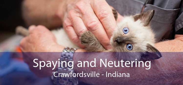 Spaying and Neutering Crawfordsville - Indiana