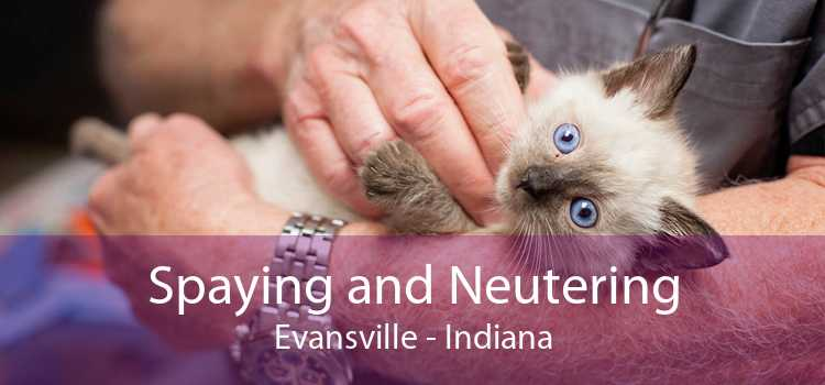 Spaying and Neutering Evansville - Indiana
