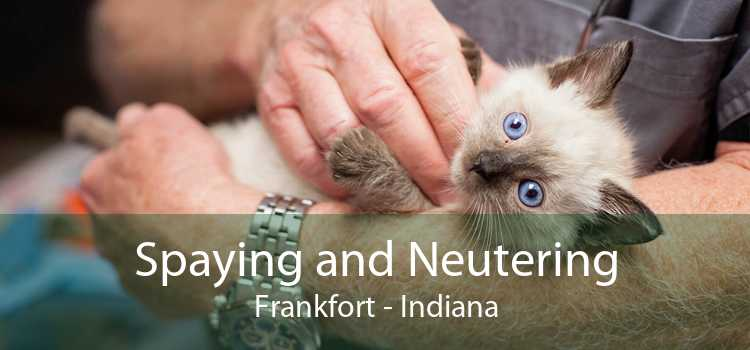 Spaying and Neutering Frankfort - Indiana